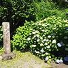 慎太郎生家の紫陽花
