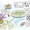 平の沢池(京都府亀岡)