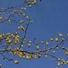 春分の三ツ辻山遊山 春の日