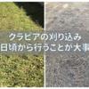 クラピアの病気とその対策(3) お生い茂るクラピアの刈り込みについて