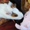 スキウサギの旅①井の頭自然文化園