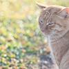 【朝明け】12月の猫たち