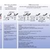 Microbial mat(微生物マット)からの高品質なgDNA抽出プロトコル