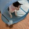 猫トンネルで遊んでる