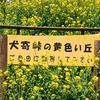 「犬寄峠の黄色い丘」