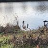 12月15日 河原猫の記録