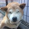 愛犬りょう16