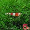 (エビ)レッドビー シュリンプ(約1cm)(5匹)【水槽/熱帯魚/観賞魚/飼育】【生体】【通販/販売】【アクアリウム】