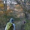 秋の皿ヶ峰遊山 橅の彩り