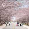 柏の葉公園で桜が咲き始める!季節の変化を追ってみた