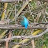 冬から春に出会った野鳥たち