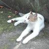 夏の瀬戸内島巡り【豊島・男木島・女木島】猫のいる風景