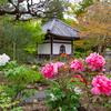 京都・黒谷 - 牡丹咲く くろ谷 西雲院