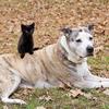 猫と犬!賢いのはどっち?研究結果は?