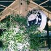 【千葉】 四街道にある素敵な「カフェローマ」【ランチ】