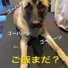 別れは絶対に避けられない。愛犬のお骨 どう納めるか 考えていますか?