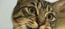 野性な感じ猫