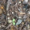 まだまだ小さな芽^ ^