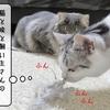 猫の道具 ~ラバーブラシ活用掃除~