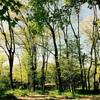 子どもの生きる力を育てたい。森のようちえんに通っています。