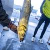 2019年11月16日 小浜漁港 お魚情報