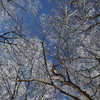 tochikoな山歩き 暦の春