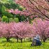 【歴史】日本の隠れた英雄:大伴部博麻(おおともべのはかま)を知ってしますか?