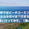 坂田海岸ではビーチコーミング出来る?タカラガイは?行き方は?トイレは?行ってみた。【館山】