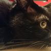 今日の黒猫モモ&白黒猫ナナの動画ー1039