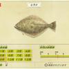 【あつ森】「ヒラメ(魚)」の出現時期・場所・時間帯情報まとめ【あつまれどうぶつの森】