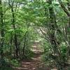 ◆4/29      新緑の高館山③…山頂~城山コース分岐