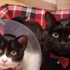 猫が去勢や避妊で性格が変わる理由は?