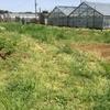 【オルかな農園報告④】~種と苗をもらって、いよいよ植え付け終了~