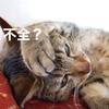 猫の腎不全はどんな病気?治療・食事のコツ