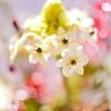 ライカマクロアダプターMで花を神秘的に撮影してみた【Leica】【LeicaM10-R】【マクロ撮影】