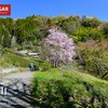 【高尾】生藤山、里山彩る山桜とツツジ、春の花と陣谷温泉を楽しむ旅