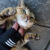 3月後半の #ねこ #cat #猫 その1