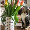 猫にチューリップは危険!食べたらどうする?