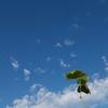 生きるのがしんどいときは  空をみよう