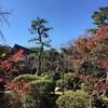 津島神社と宝寿院の紅葉情報