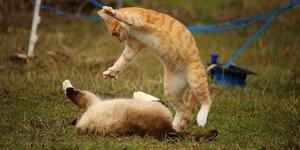 学校の前でママ同士が喧嘩し始めた