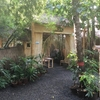 世界の学校訪問 1 バリ島の「グリーンスクール(Green School)」