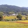 秋の明日香 -稲穂と彼岸花とビオマルシェ-