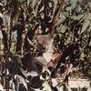 毎日更新 1983年 バックトゥザ 昭和58年7月3日 オーストラリア一周 バイク旅 9日目 22歳 円満具足 初コアラ ヤマハXS250  ワーキングホリデー ワーホリ  タイムスリップブログ シンクロ 終活