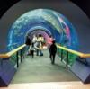 京都から一時間! 琵琶湖博物館は歴史も昆虫も淡水魚も味わえます!