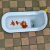 トイレの退化