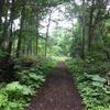 江別・野幌森林公園でバードウォッチングと、高コスパのSoraのパン