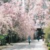 桜散歩と大きなカメラ