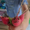 二十日大根の収穫と今年の梅仕事