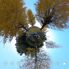 黄色の銀杏であふれる景色を360写真でとってみる #360pic